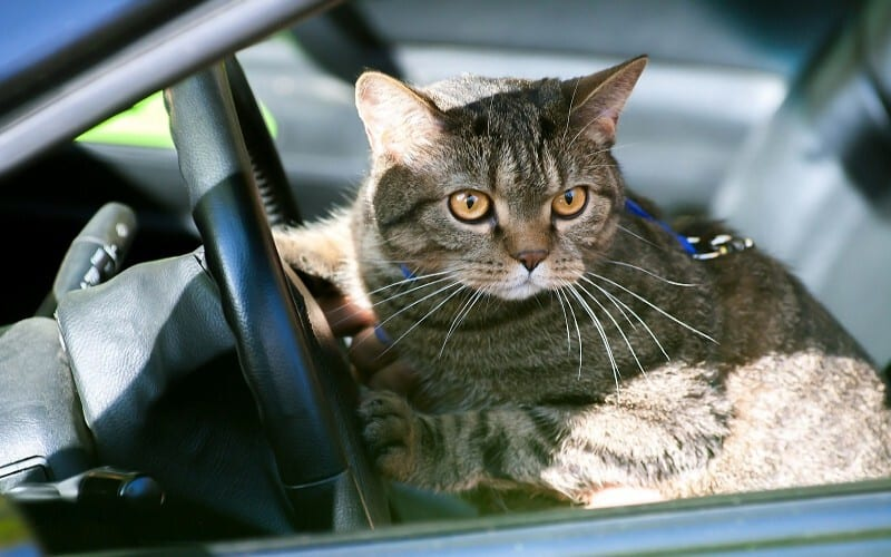 10 Things to Know When Traveling With Cats in a Fifth Wheel